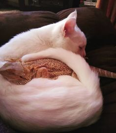 Meet Charles the female bearded dragon and Baby the cat, the lovely duo that… Cute Funny Animals, Cute Baby Animals, Animals And Pets, Cute Cats, Chat Maine Coon, Bearded Dragon Funny, Cute Lizard, Dragon Cat, Cute Reptiles