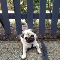 What? I got stuck under the fence on purpose. Shut up - I'm not getting fat!