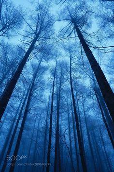 Fog in the forest by AkiraJinba