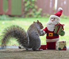 Hi Santa.... I'm Squirrel.. I've Been A Good Squirrel All Year.... Did You Bring Me Some Nuts This Year?? Well Merry Christmas & Happy New Year To You Santa!! ❤️    ❤️