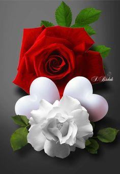 To my dear Joe ❤Love you Beautiful Rose Flowers, Rare Flowers, Heart Wallpaper, Love Wallpaper, White Roses, Red Roses, Hearts And Roses, Rosa Rose, Rose Images