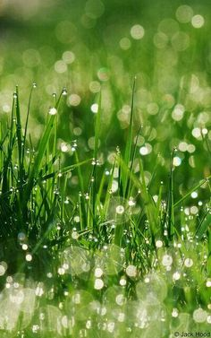 Dew on the summer morning grass...