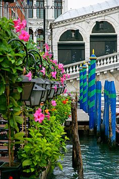 Pink flowers on the Grand Canal in Venice Italy - that's a restaurant dining patio right there... and the Rialto bridge in the background #places #travel