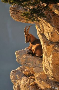 Steenbok, Chamonix