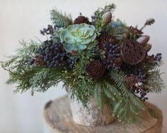 succulents in winter wedding pine cones - Google Search