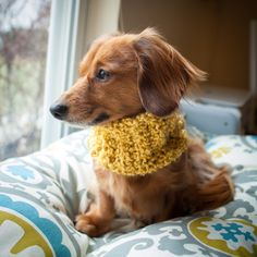Puppy Scarf- Dog scarf, cowl, dachshund scarf, cowl, small dog scarf, cowl. $10.00, via Etsy.
