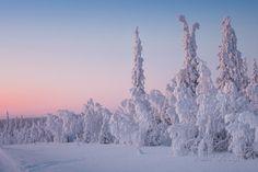 Winter Landscape in Lapland Premium Poster