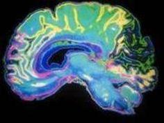 ¿Eres de los que piensan que usa el 10% de su cerebro? Pues no, este estudio muestra que usamos 10 veces más del cerebro de lo que la gente piensa usa. ¿Por qué? Muy sencillo, se ha descubierto que  las dendritas, definidas como unas prolongaciones ramificadas de las células nerviosas,encargadas de recibir y transmitir la información a través de estímulos externos, forman casi el 90% del tejido cerebral. Pero eso no es todo, si quieres saber más pincha en el enlace.