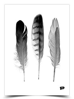 Epic Design Poster - Veren - - ZiZo Living woonaccessoires, stationary en lifestyle - Photography, Landscape photography, Photography tips Quote Prints, Art Prints, Stippling Art, Poppies Tattoo, Tattoo Magazines, Spring Art, Feather Tattoos, Feather Print, Silhouette