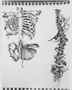 Art|sketchy|butterfly|nature|anatomy|spinal chord|floral|bug