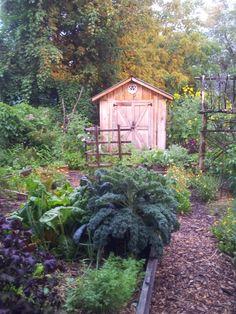 Kathy Sturr's Garden ~ What's Growing: Kale & Collards