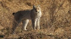 Noticias de Medio Ambiente y Ecología - http://verdenoticias.org/index.php/component/content/article/34-noticias/animales/293-chernobil-tiene-animales-salvajes-30-anos-despues-del-desastre?Itemid=101