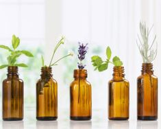 Essential oils are used as natural remedies for various conditions and to improve the health of skin, hair and body. Learn about the top essential oil uses and essential oil benefits. Top Essential Oils, Young Living Essential Oils, Essential Oil Blends, Loción Facial, Ravintsara, Eucalyptus Oil, Oil Benefits, Carrier Oils, Perfume