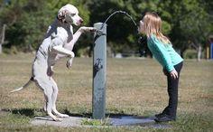 Natuurlijk gedrag van dieren is ook eigenlijk het mooist om vast te leggen.