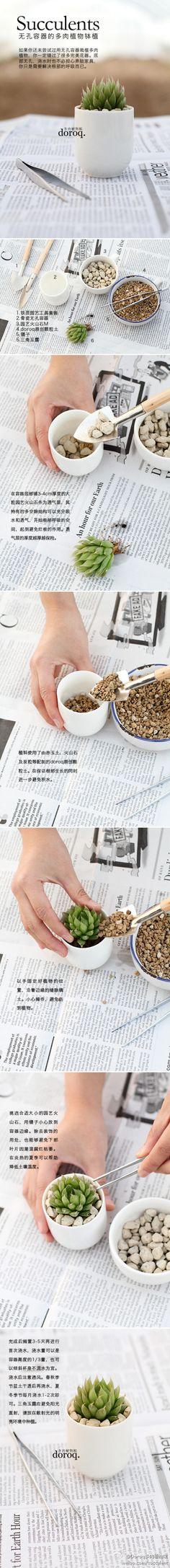 Succulent how to - in another language but it's step by step pictures. 小小玉露