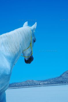 white-horse-in-desert.jpg 399×600 pixels