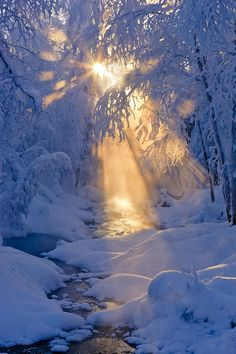 Small Stream In A Hoarfrost Covered Photograph  -