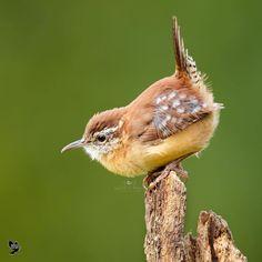 •••• BIRDS OF THE WORLD ❣️ (@birds_adored) • Photos et vidéos Instagram