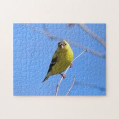 American Goldfinch Photo Puzzle. Jigsaw Puzzle  $20.70  by BackyardNature  - cyo diy customize personalize unique