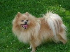 Image result for beautiful dog