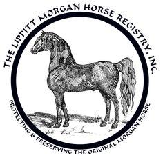 Lippitt Morgan horse registry
