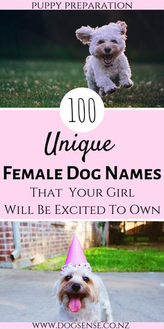 dog names girl 100 unique female dog names that your new puppy will love. Looking for the perfect name and want to know the meaning then read on! Choosing a name is the most exciting part of the puppy preparation! Girl Puppy Names Unique, Cute Girl Dog Names, Funny Dog Names, Cute Names For Dogs, Best Dog Names, Yorkie Names Girl, Female Dog Names List, Unique Female Dog Names, Puppies Names Female