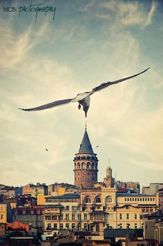 Seagull in Istanbul: Galata Tower ♠ by Prens Guz Istanbul City, Istanbul Turkey, Happy Week End, Vacation Planner, Amazing Buildings, Turkey Travel, Great Photos, Places To See, Paris Skyline