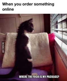 haha! so this really made me laugh. Kahlua(my cat) totally stands like this. lol. but about that package......