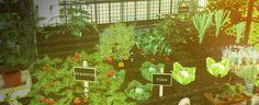 Sims 4 CC's - The Best: Pflanzen / Plants