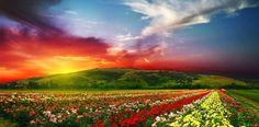 VALLEY OF FLOWERS NATIONAL PARK, INDIA This World Heritage Site, set against the wilderness of the Himalayas, is covered in vibrant flowers. Add in a sunset and this view takes the cake.
