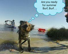 Swimmer dog,hummm, I like splash  water