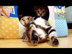The most polite kitten . I'm Pikachu !  http://naglly.com/archives/2013/08/the-most-polite-kitte.php