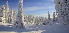 Pallas-Yllästunturi: Trek from hilltop to hilltop through the arctic fells along Finland's first hiking trail. Winter Travel, Arctic, Roads, Lakes, Finland, Winter Wonderland, Trek, National Parks, Europe