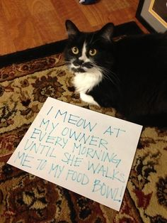 Your morning ritual is a humiliating misery: | 23 Signs Your Cat Actually Owns You :: Asshole Rocky pulled this on me at five o'clock this morning. If he sees the bottom of the bowl, it's empty in his mind, so I just shake it and he's happy. ::