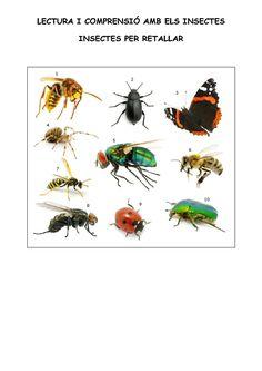 Lectura i comprensió amb imatges d'insectes. Juguem?