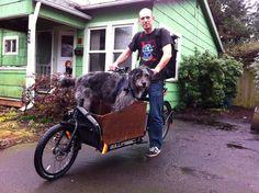 I heard you like Bullitt dogs Bullitt Cargo Bike, Biking With Dog, Baby Strollers, Motorcycle, Film, Vehicles, Dogs, Baby Prams, Movie