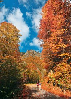 Το μοναδικό παρθένο δάσος της Ελλάδας και ένα από τα ελάχιστα της Ευρώπης βρίσκεται στη Δράμα!