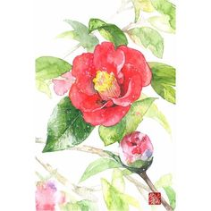 """동백꽃 camelia 꽃말은 """"그 누구보다 당신을 사랑한다"""" <span class=""""emoji… Watercolor Drawing, Watercolor Illustration, Watercolor Flowers, Japan Tattoo, Art Reference Poses, Watercolor Techniques, Chinese Art, Great Artists, Flower Art"""