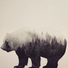 Double Exposure Portraits Show Beautiful Animals and Their Habitats Dual Exposure, Double Exposure Photoshop Action, Double Exposure Photography, Animals Tumblr, Animal Photography, Nature Photography, Photography Ideas, Landscape Photography, Forest Drawing