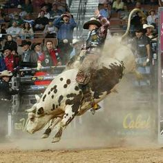 Bull Riding Hall of Fame | Displaying (18) Gallery Images For Pbr Bulls...
