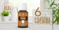 Young Living's guide to using Copaiba essential oil features handy tips on how to use this sweet Amazonian aroma, plus the benefits of adding Copaiba to your day and your diet.