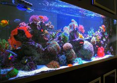 salt water aquarium | HDR Sherry's 285 Gallon Saltwater Aquarium Right Side Angle | Flickr ...