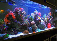 salt water aquarium | HDR Sherry's 285 Gallon Saltwater Aquarium Right Side Angle | Flickr ...
