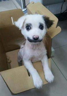 Animals with mustaches.  This just might be the cutest puppy ever.