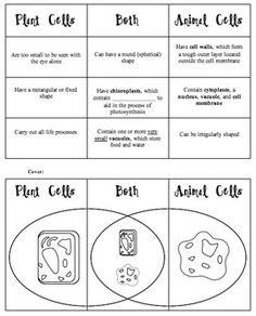 Plant Cell Animal Venn Diagram 350 Oil Flow Science Ideas Vs Foldable Teacherspayteachers Com