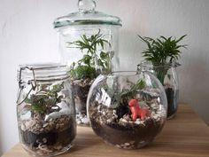 euphorbia turbiniformis su canariensis - buscar con google | decor, Innenarchitektur ideen