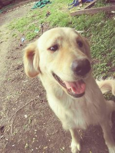 LOST DOG: 07/03/2017 - Northeast Side, San Antonio, Texas, TX, United States. Ref#: L32771 - #CritterAlert #LostPet #LostDog #MissingDog