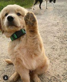 Got a a boo boo, pick me up...now make me half a bologna samich :) #goldenretriever