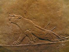 IMPERIO ASIRIO: La leona herida, relieve procedente del palacio de Asurbanipal, en Nínive (s. VII a.C.). Forma parte de la serie de la cacería de Asurbanipal.