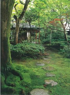 Mossy garden #japanese - Love the moss at the bottom of these trees.